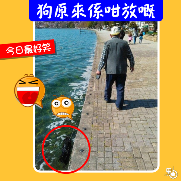 funny_20170118_900_001